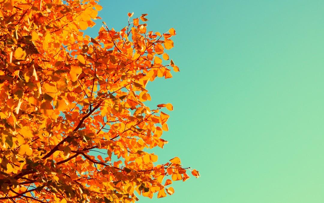 Ako na jeseň ušetriť za vykurovanie?