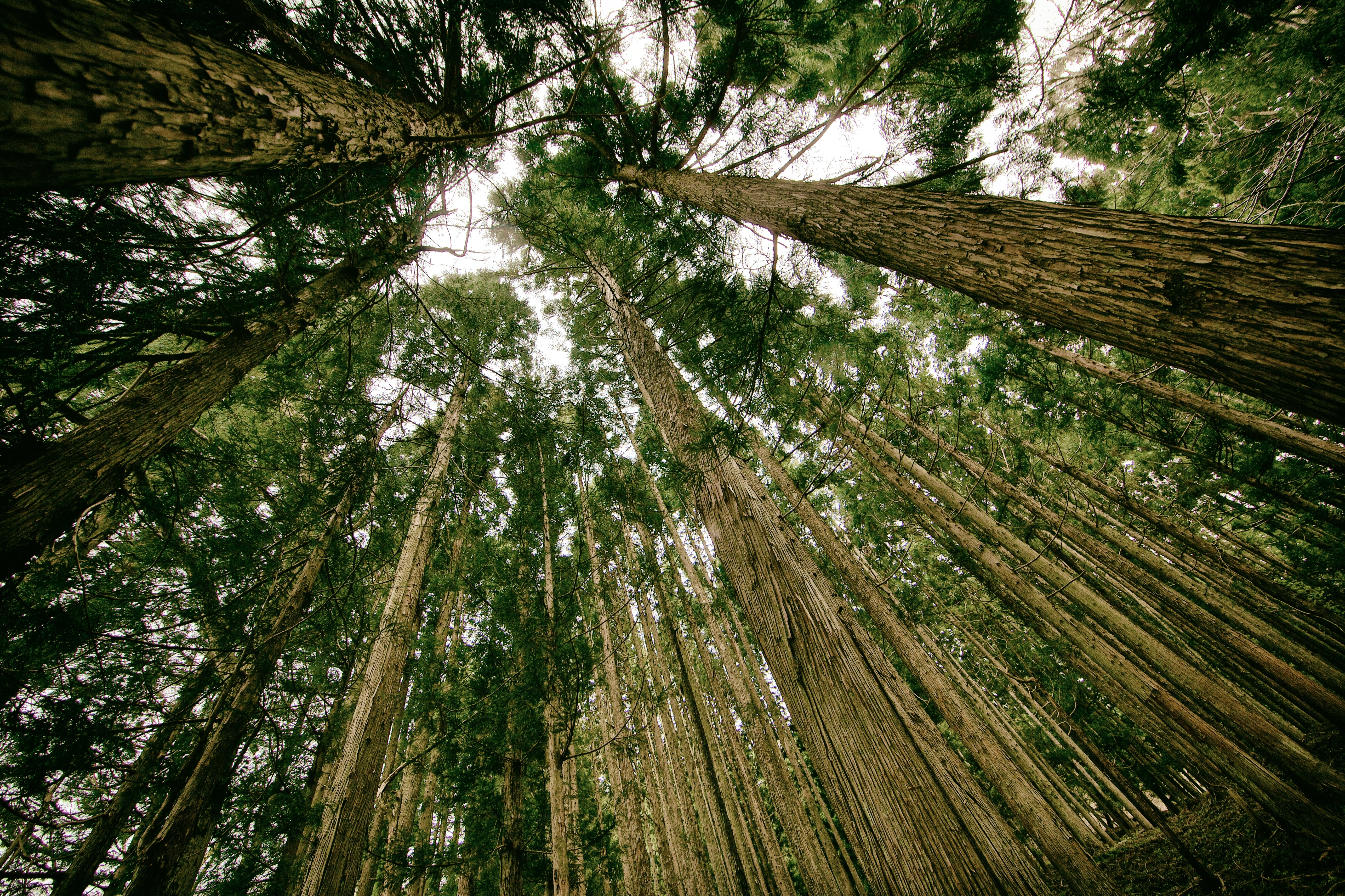 nature-forest-trees-high
